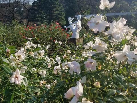 生田緑地 ばら苑